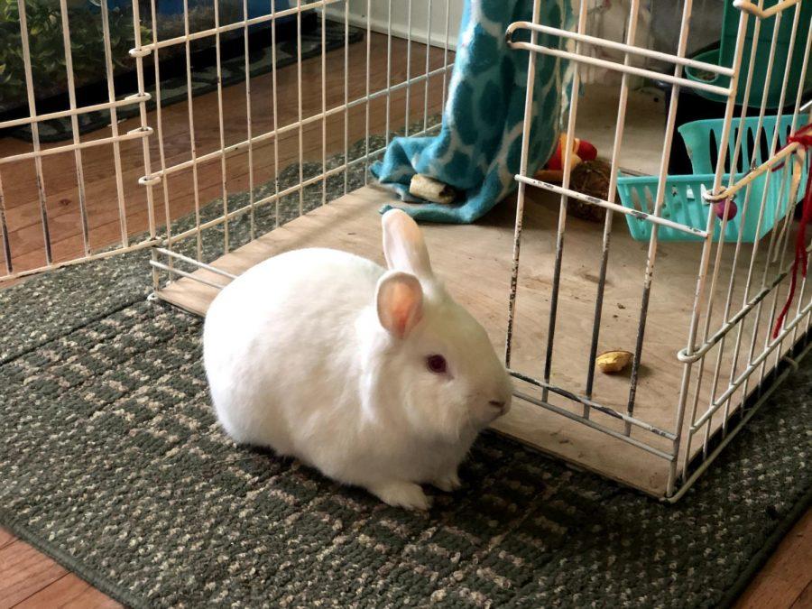 Mrs. Ninan's pet rabbit, Mr. Bubbles.