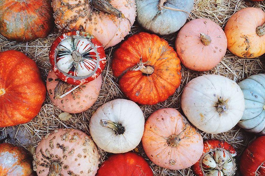 Spooky Season Minus the Spooky: Halloween Fun for the Faint of Heart